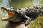 تمساح مرکز خرید اوپال از ولنجک آمد