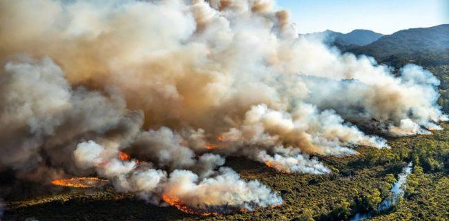پایش هوشمند آتش سوزی در جنگل گلستان با اینترنت اشیا