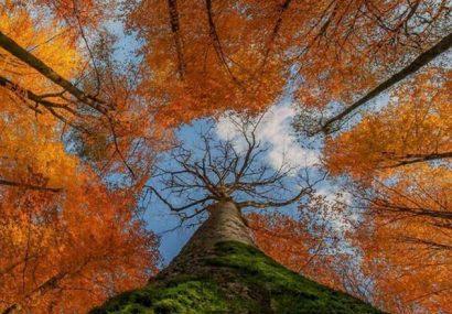 تخمین ذخیره کربن جنگلها با فناوری سنجش از دور